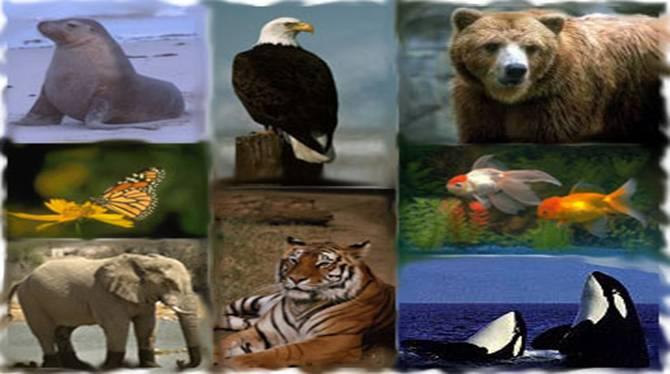 Zoology usyd international studies